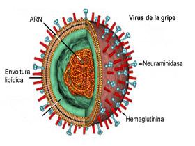 virus-gripe2