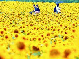 alergia-flores-primavera-polen
